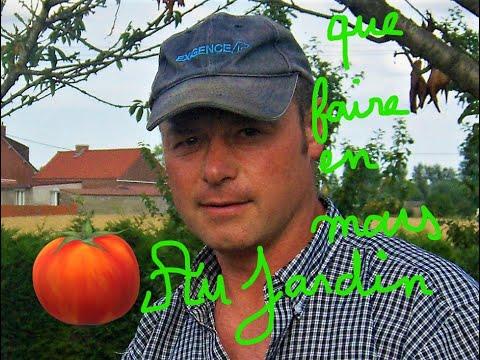 Que faire au jardin en mars evolution des semis oeillets d inde et semis de tomates youtube - Que faire au jardin en mars ...