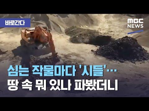 [바로간다] 심는 작물마다 '시들'…땅 속 뭐 있나 파봤더니 (2019.05.07/뉴스데스크/MBC)