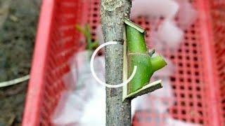 Como Fazer Enxerto para Todas as Plantas