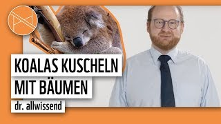 Koalas kuscheln mit Bäumen | Tier-Fakten mit Dr. Allwissend | planet : panda