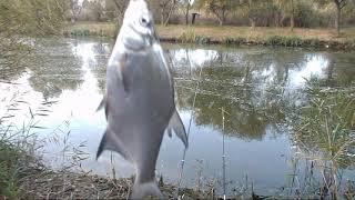 Рыбалка Збурьевский кут Ноябрь