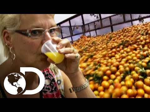 Dentro de una fábrica de jugo de naranja | ¿Cómo lo hacen? | Discovery Latinoamérica