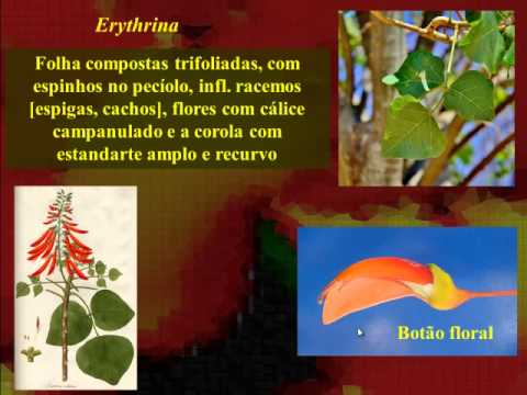 Fabaceae PARTE I