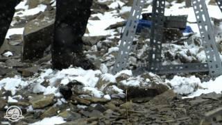 Banff National Park - Wild Images