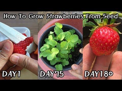 공짜로 딸기 모종