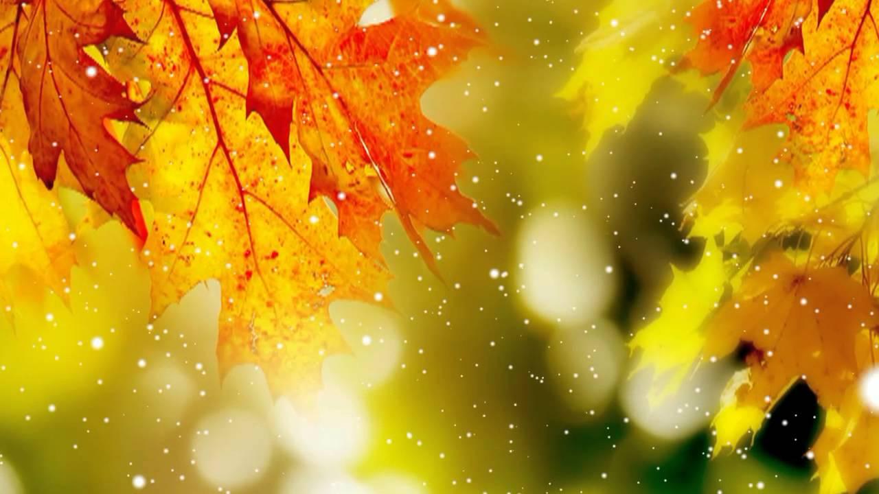 Футаж для фона Осень - YouTube