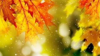 Футаж для фона Осень