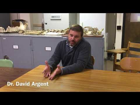 Fisheries And Wildlife Biology Bachelors Degree Pennsylvania - Faculty Showcase: Dr. David Argent