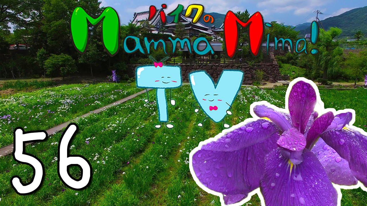 Japanese Iris - MMTV56 【Events in Mima, Tokushima, Shikoku & Japan!】