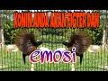 Konin Gacor Full Tembakan Bikin Konin Lain Langsung Bunyi Ngobra  Mp3 - Mp4 Download