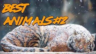 Best Animals Cube #2 | Лучшие кубы с животными #2 (Ноябрь 2018)