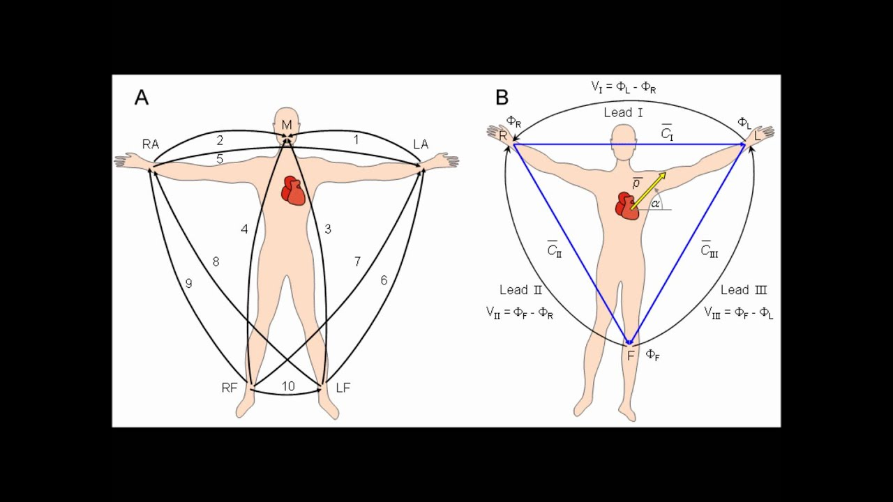 standard ekg diagram 1999 honda accord fuse box basic ecg lecture youtube