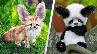 10 Милейших Детей Животных