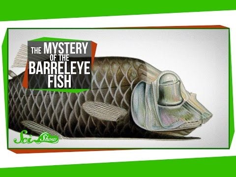 The Mystery of the Barreleye Fish