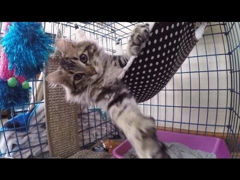 'Cats Discovering Hammocks Compilation' || CFS
