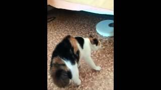 Кошка разговаривает человеческим голосом