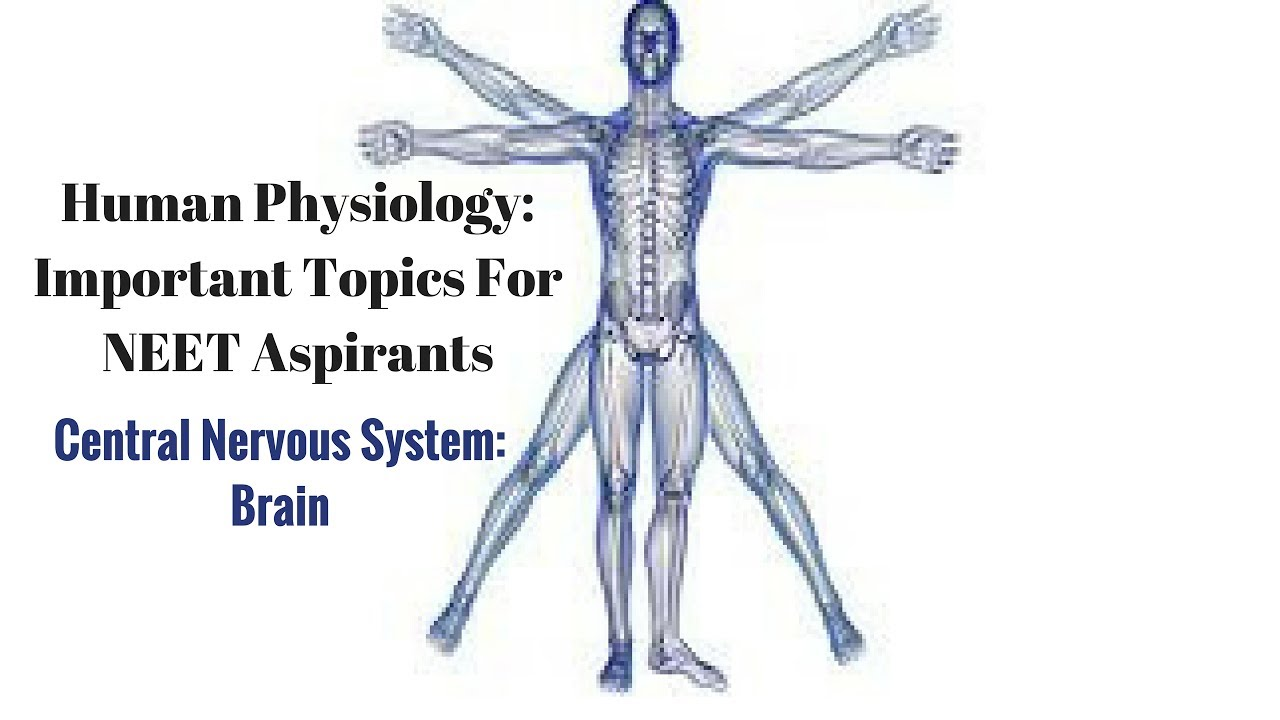 Central Nervous System: Brain- Human Physiology for NEET Aspirants ...