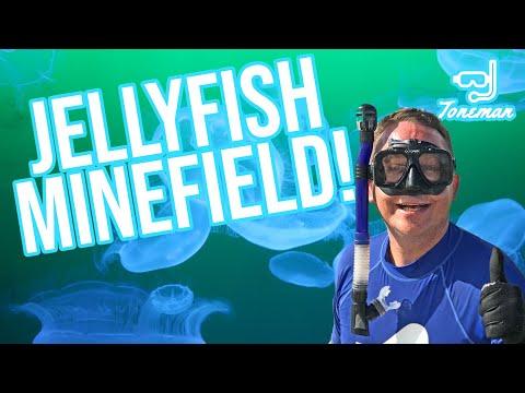 Snorkeling In Panama City Beach | Navigating A Jellyfish Minefield!