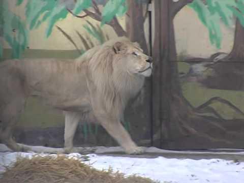 Животные ярославского зоопарка готовятся к зимовке