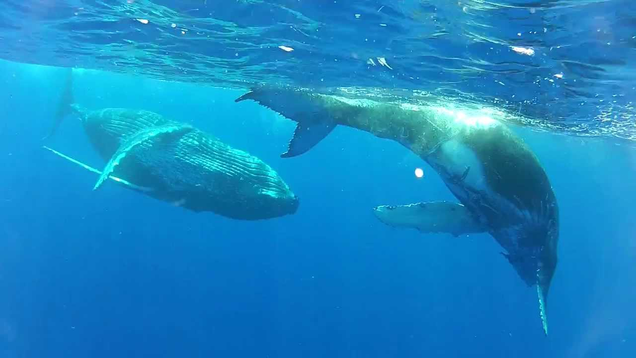 Love between mother whale and his baby; so cute... - YouTube