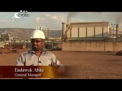The Green Desert, sugar plantation and processing investment,Ethiopia Sugar Corporation,Walta