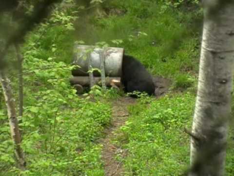 Mustakarhujahtia Kanadassa