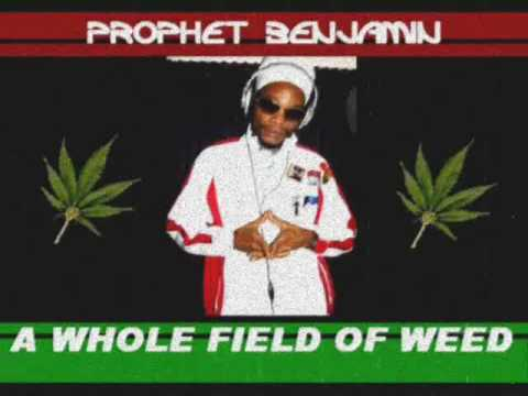 Prophet Benjamin- A Whole Field of Weed