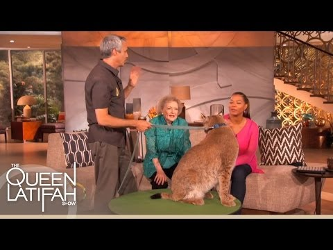 Betty White Brings Some Furry Friends For a Visit on The Queen Latifah Show