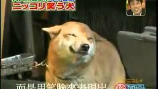 超級無敵可愛會笑的狗兒