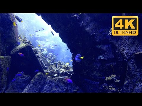4K Underwater Seascape with Tropical Marine Fish