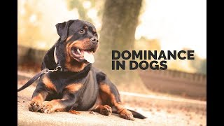Michael Ellis On Dominance In Dogs