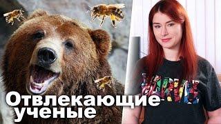 Если медведь рядом