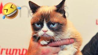 TOP 10 FUNNIEST CAT Videos #1  | Cat Lovers | Funny Pet Videos | SHORT & FUNNY Videos