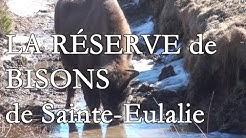 La réserve de bisons d'Europe de Sainte-Eulalie