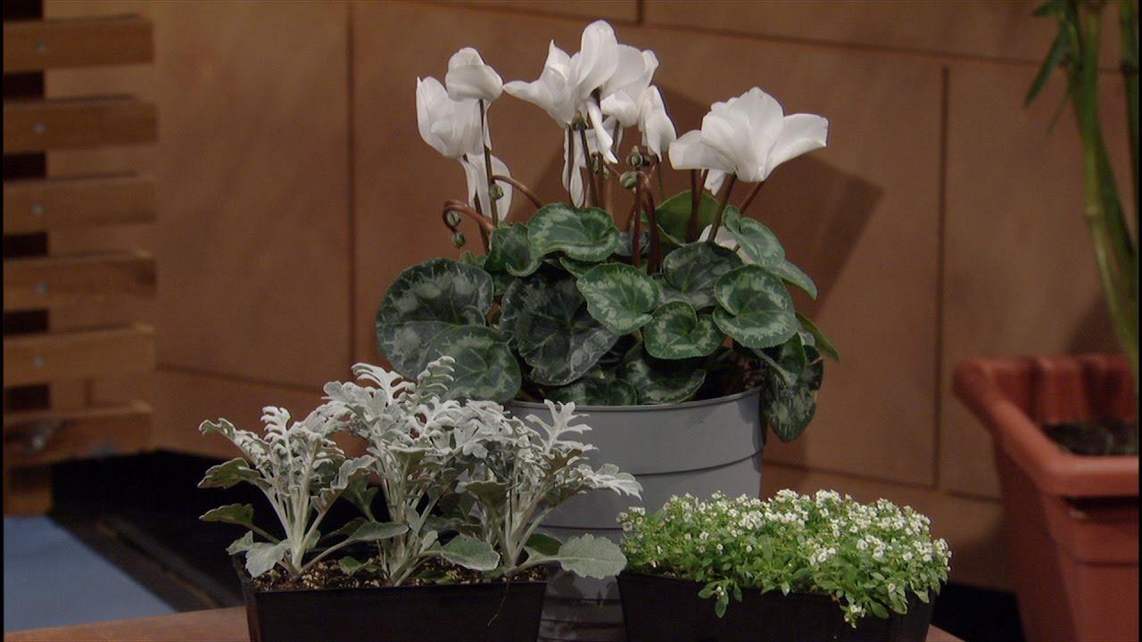 Plants That Light Up the Night  Amanda Moon  Central Texas Gardener ...
