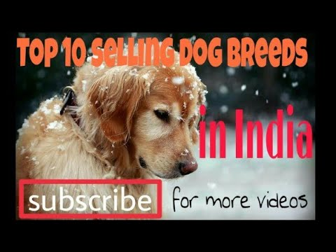 Top 10 selling dog breeds in India.new video 2018