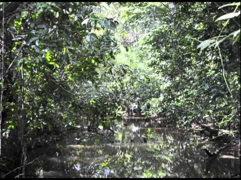 amazon rainforest deforestation. deforestation in the amazon rainforest