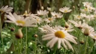 Felicitas (Trailer)