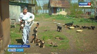 Жительница Шипуновского района организовала на своем подворье приют для животных