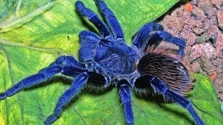 Top 10 New Discovered Animal Species 2014