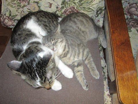 Любящий кот. 1ая серия