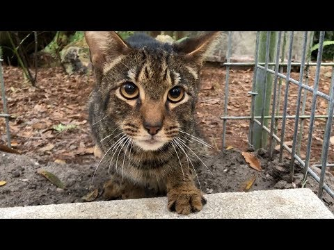 Another Unwanted Savannah Cat Gets A Forever Home - YouTube