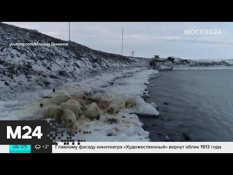 Дело Соколова и белые медведи на Чукотке: новости России за 6 декабря - Москва 24