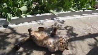 #Кот отдыхает Кот через 10 лет #Cats Животные для детей Приколы с котами 2016