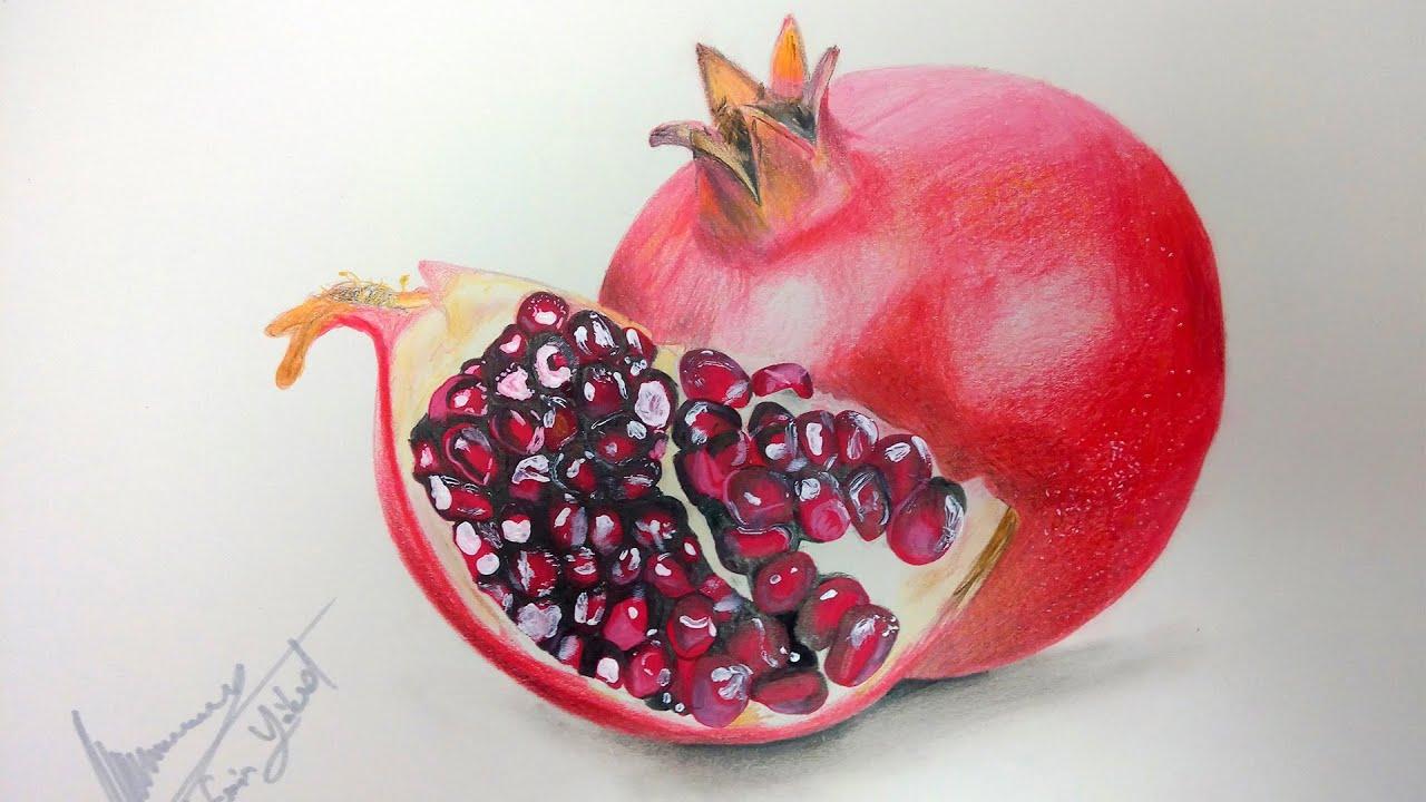 Nar çizimi Pomegranate Drawing Youtube