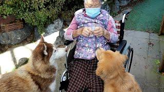 할머니 요양병원 들어가기 전 강아지들과 함께