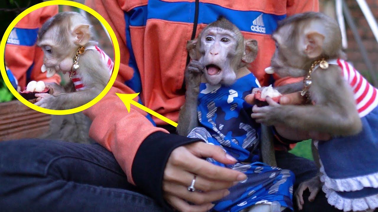 Smart monkey Too so happy sit eat fruits with baby monkey Ryya.