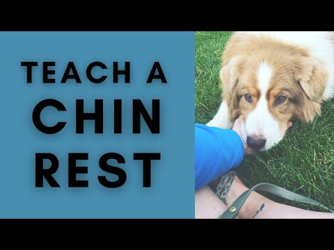 Chin Rest - Cooperative Care - Dog Training