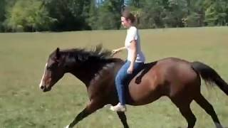 Horseback riding bareback bridleless - galloping, lead changes