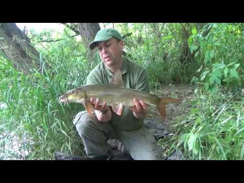 Barbel fishing the River Wye using the barbel bomb method